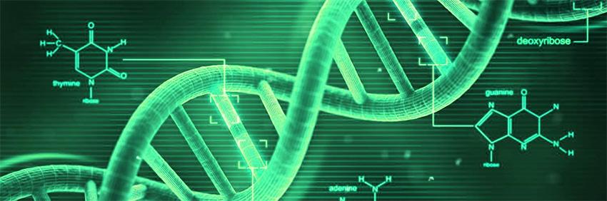 ADN y evolución