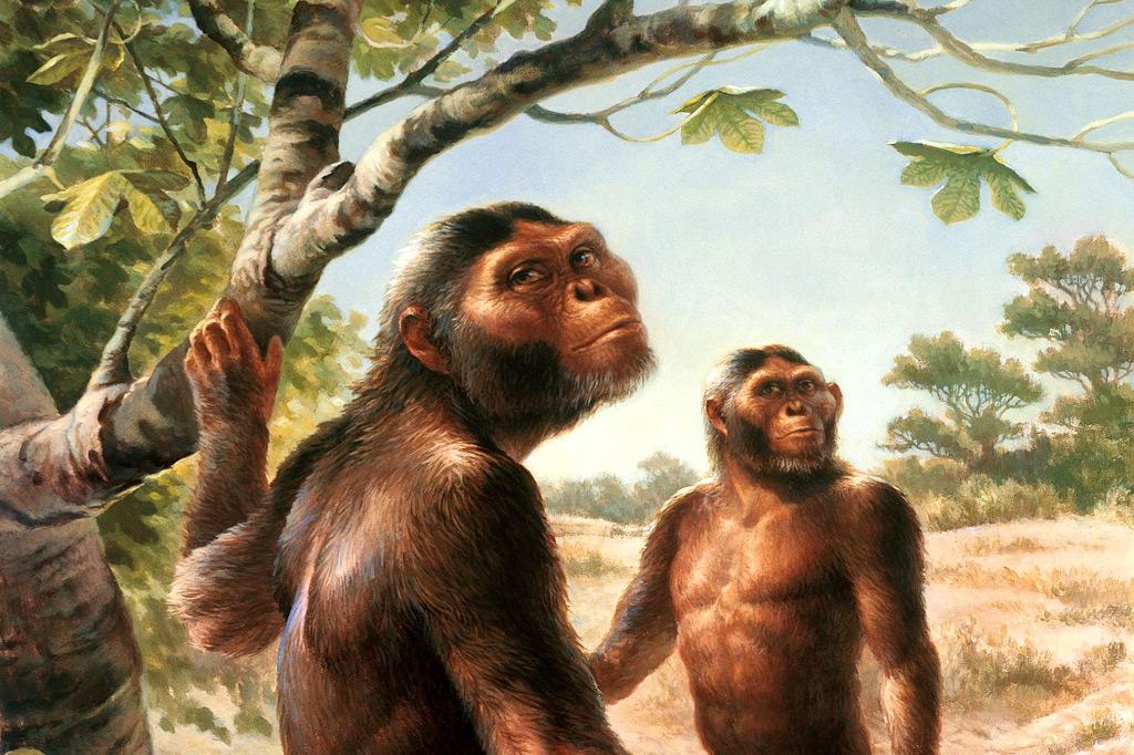 Ambiente de adaptabilidad evolutiva